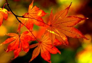 秋の夜長の意味とは?習字や音楽で過ごす夜も!