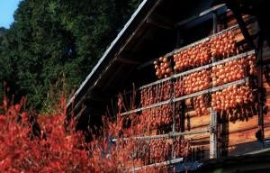 干し柿 の作り方 カロリー